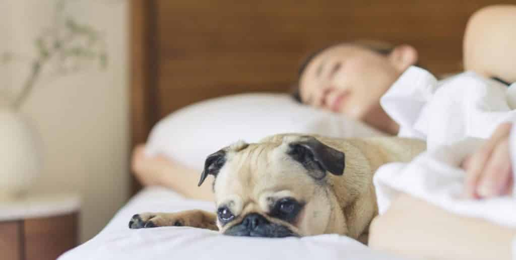 fatigue is a sign or pregnancy