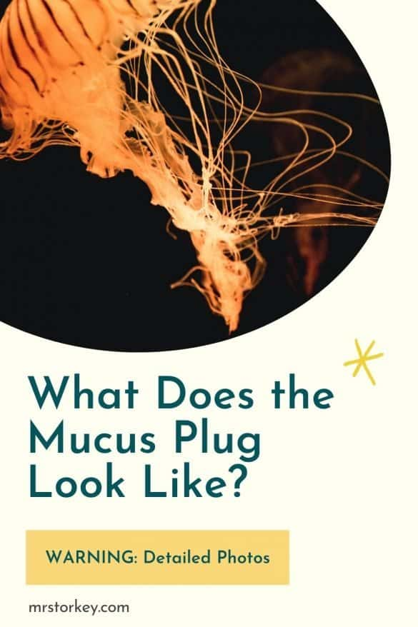 What does the mucus plug look like